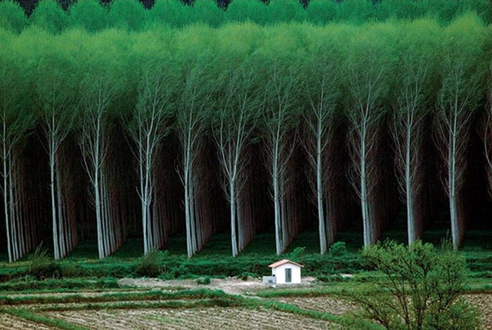 perfectly aligned trees