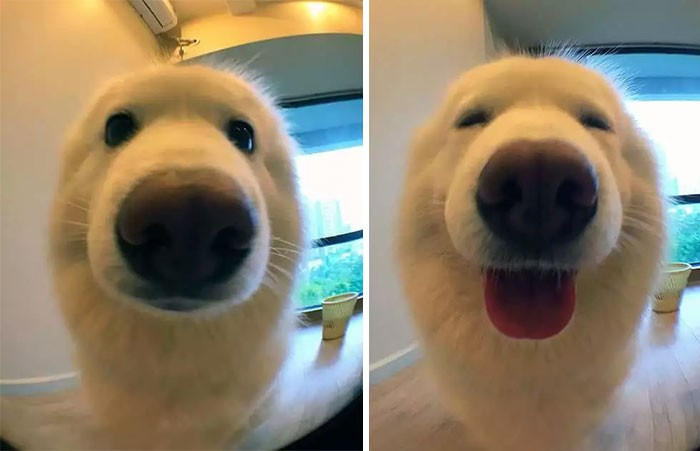 dog reacting to being called good boy