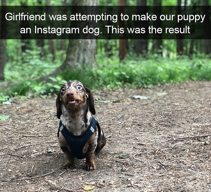 Funny Snapchat dog moments