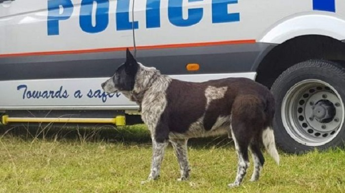 max the dog near a police girl