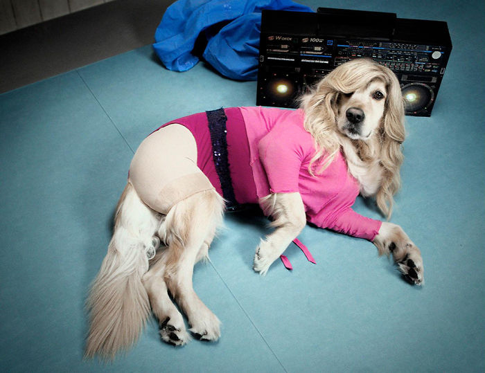 dog recreated Madonna's photos