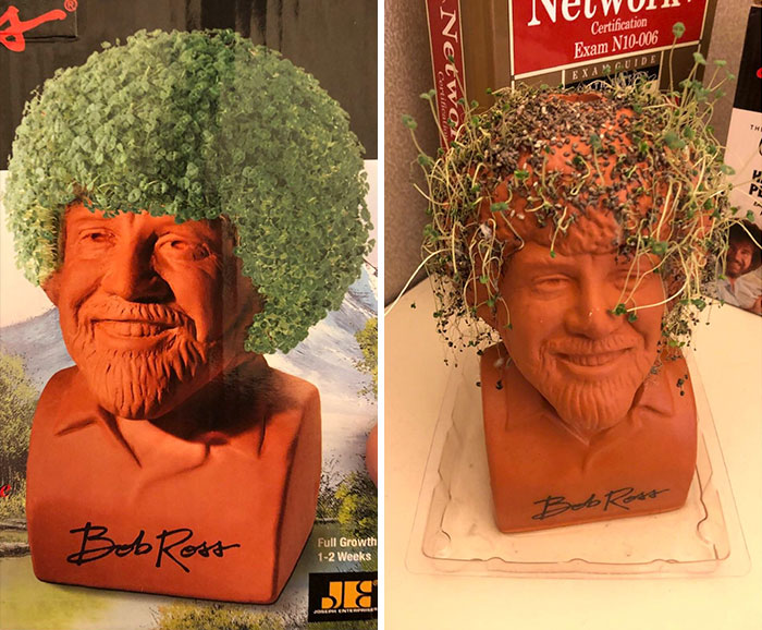 a messy Bob Ross Chia Pet