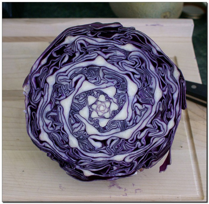 the inside of a cabbage