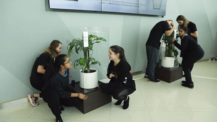 IKEA plant bullying experiment