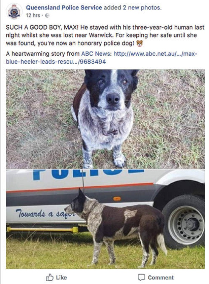 a police announcement on max the dog